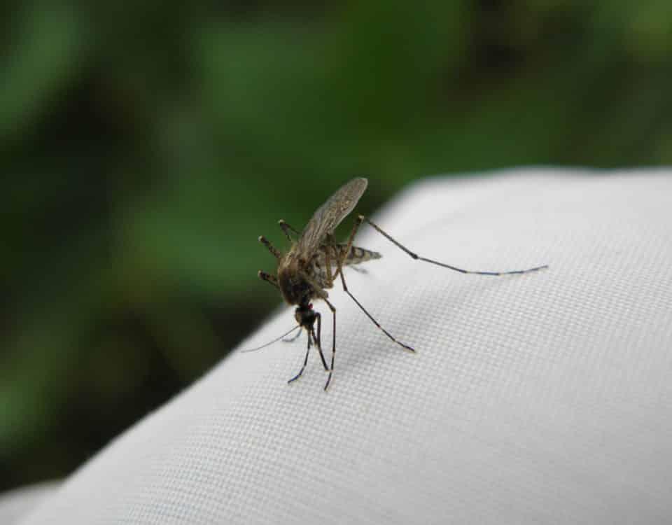 Jakie choroby przenoszą komary?
